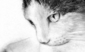 Pet Portraits  - Danny