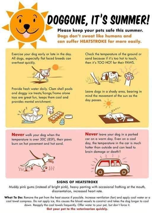 Keep your pets safe this summer